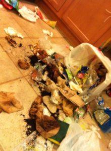 Trash on Kitchen Floor